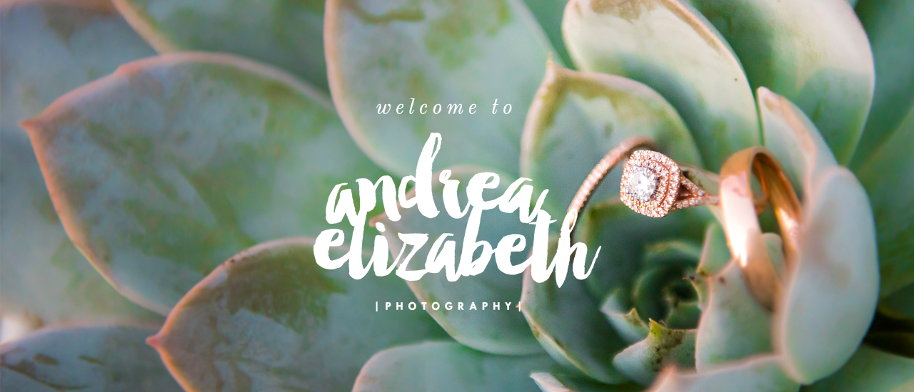 Andrea Elizabeth Photography - North Texas Wedding Photography